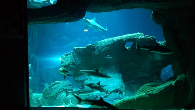 Aquarium insolite free camion aquarium with aquarium for Aquarium insolite