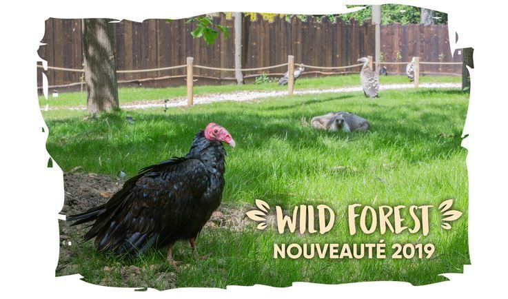 wildforest2019