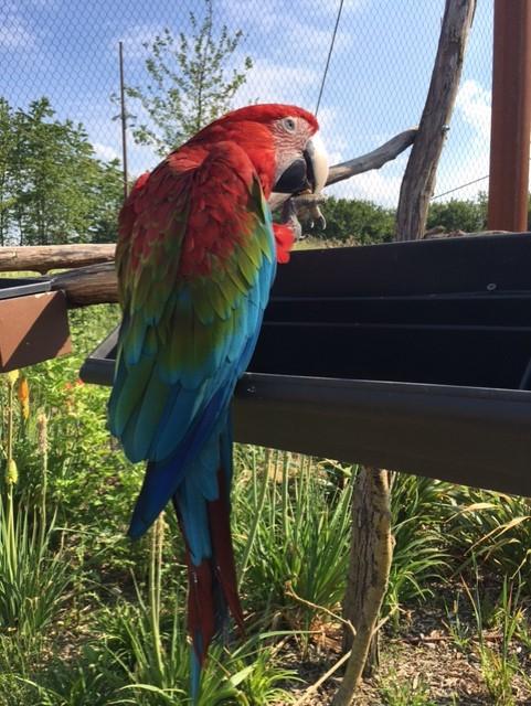 perroquet02